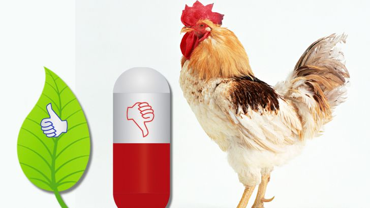 of antibiotic as a growth promoters (AGP)